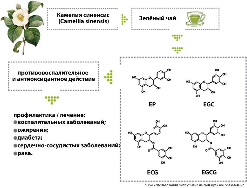 Структура основных соединений, содержащихся в камелии синенсис (зелёный чай) и её влияние на здоровье человека