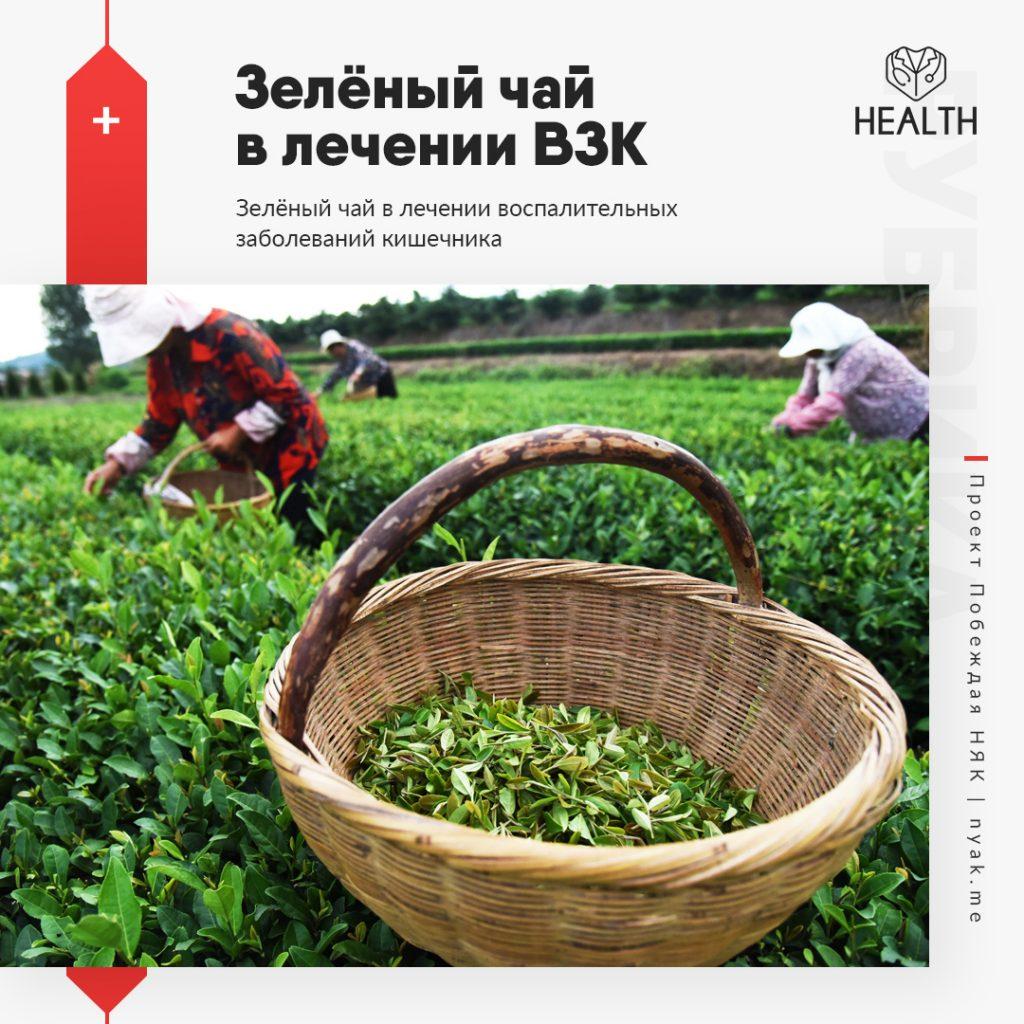 Зелёный чай в лечении воспалительных заболеваний кишечника