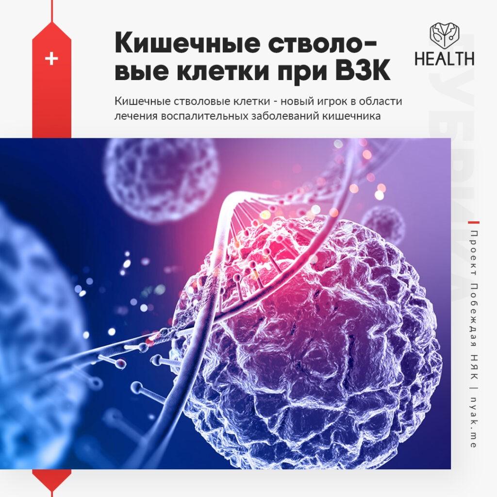 Кишечные стволовые клетки при ВЗК. КСК - новый игрок в области лечения воспалительных заболеваний кишечника