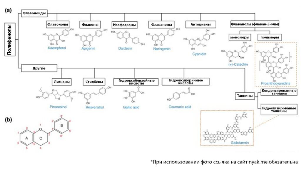 Классификация и нумерация флавоноидных полифенолов