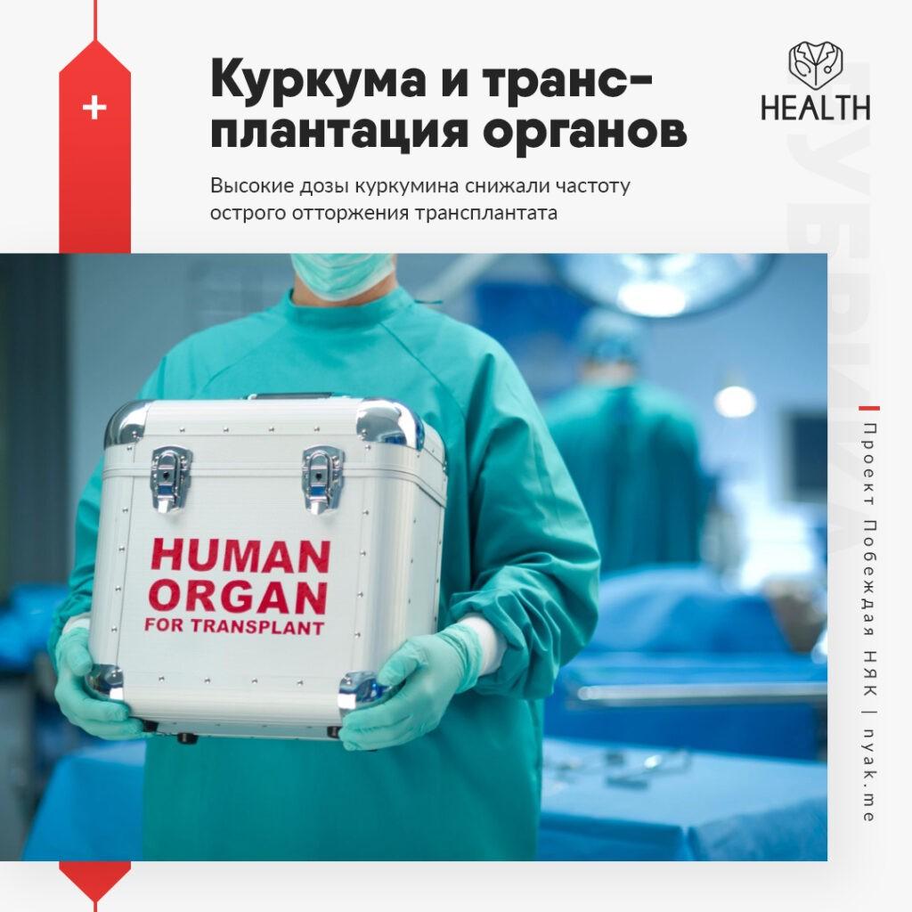 Куркума и трансплантация органов. Высокие дозы куркумина снижали частоту острого отторжения трансплантата