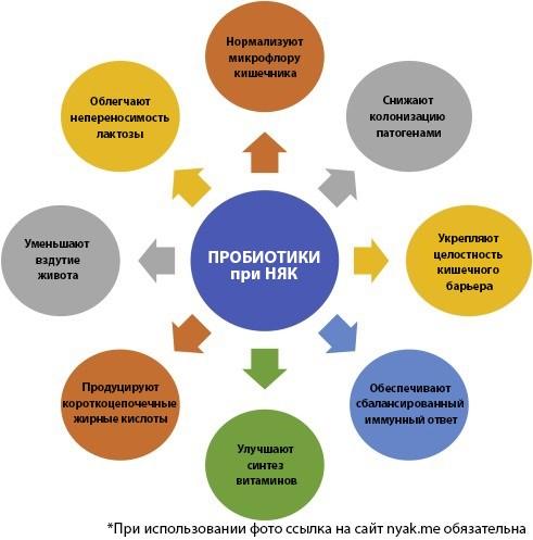 Пробиотики при НЯК. Многофакторные механизмы, связанные с пробиотиками