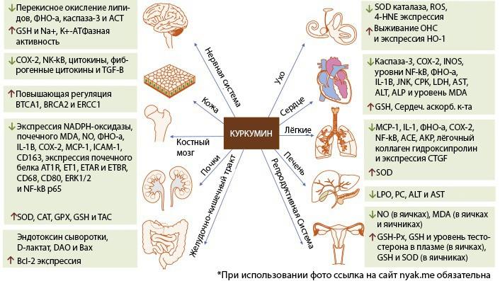 Влияние куркумина на здоровье. Потенциальные пути куркумина в лечении различных побочных реакций, вызванных химиотерапией и лучевой терапией